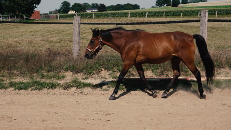 An meinen liebsten Pferde-Opi und besten Freund